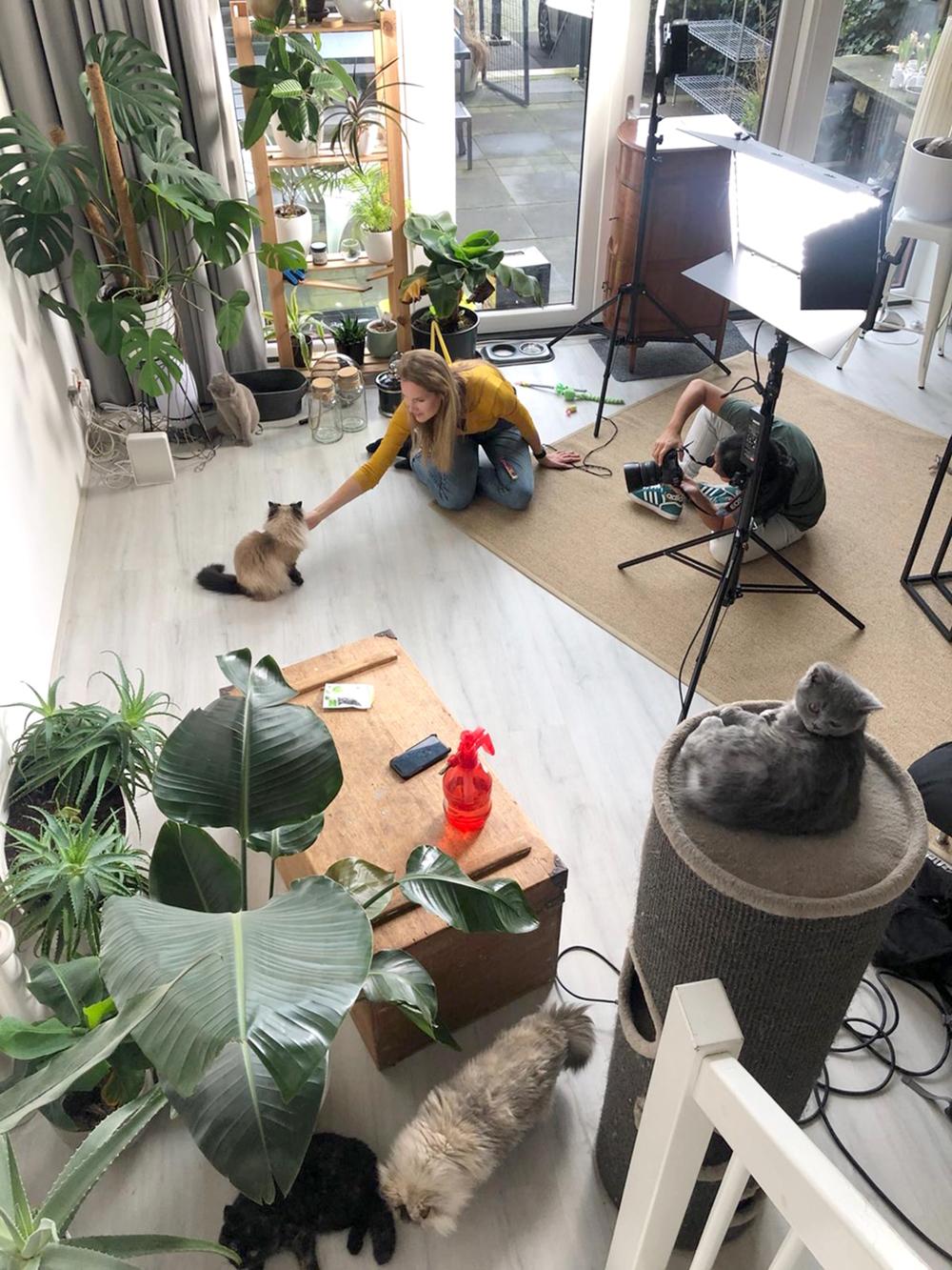 Behind the scenes katten Furbie, Linda, Bowie, Boter en Ramon