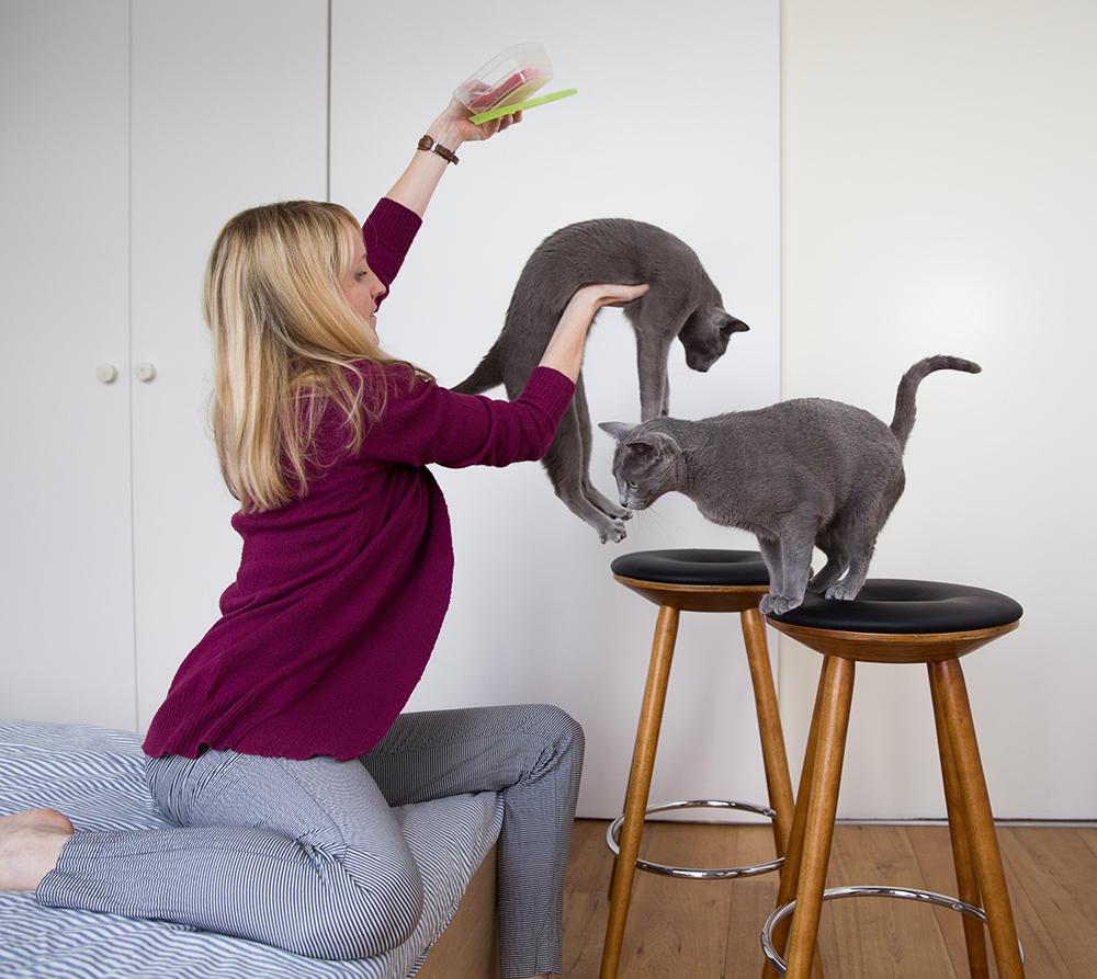 Behind the scenes russian blue katten Austin en Amelie