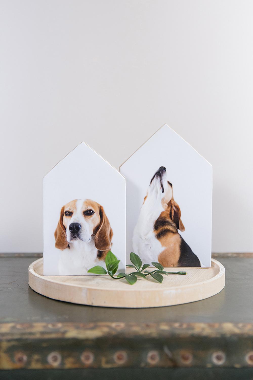 Productfoto fotohuisjes beagle Joris
