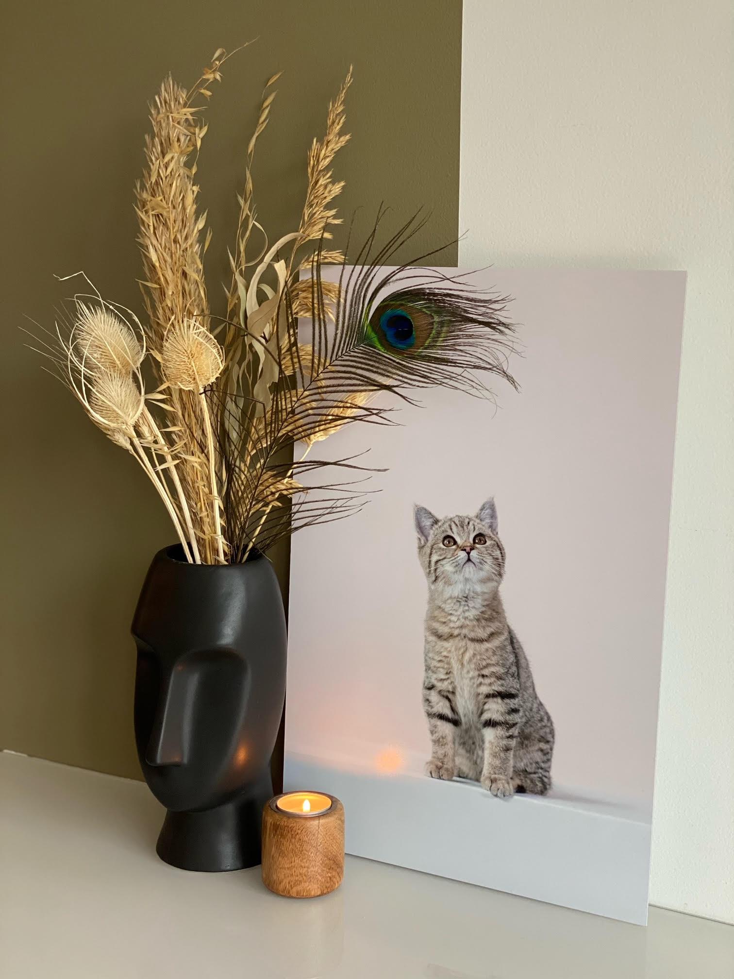 Productfoto print op aluminium kitten Bobbie